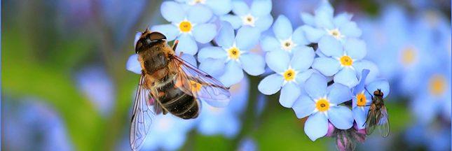 l'avenir des abeilles